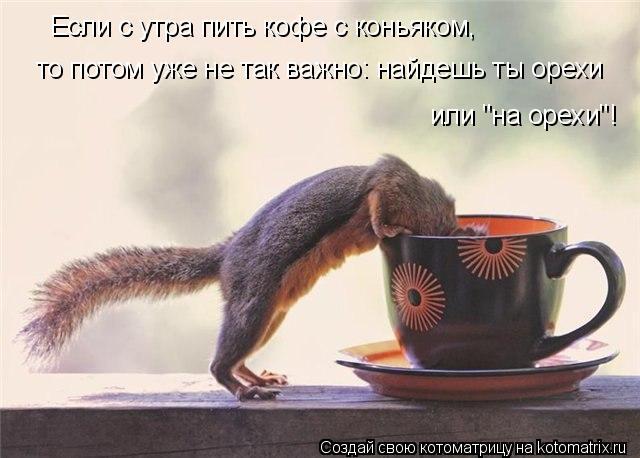 """Котоматрица: или """"на орехи""""!  Если с утра пить кофе с коньяком, то потом уже не так важно: найдешь ты орехи"""