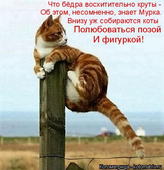 Котоматрица: Внизу уж собираются коты Что бёдра восхитительно круты - Об этом, несомненно, знает Мурка. Полюбоваться позой  И фигуркой!