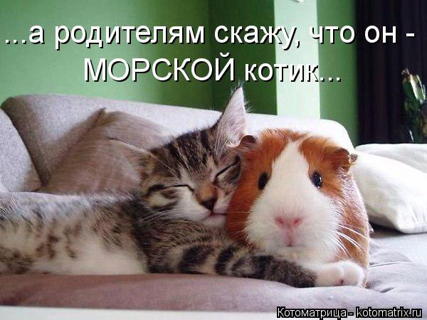 Котоматрица: ...а родителям скажу, что он - МОРСКОЙ котик...