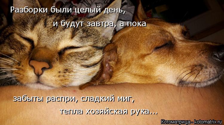 Котоматрица: Разборки были целый день, забыты распри, сладкий миг,  и будут завтра, а пока  тепла хозяйская рука...