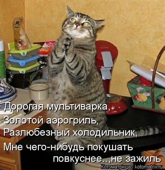 Котоматрица: Дорогая мультиварка, Золотой аэрогриль, Разлюбезный холодильник, Мне чего-нибудь покушать повкуснее..,не зажиль