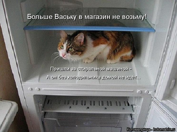 Котоматрица: Больше Ваську в магазин не возьму! Пришли за стиральной машиной - А он без холодильника домой не идёт...
