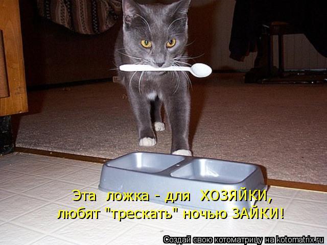 """Котоматрица: Эта  ложка - для  ХОЗЯЙКИ, любят """"трескать"""" ночью ЗАЙКИ!"""