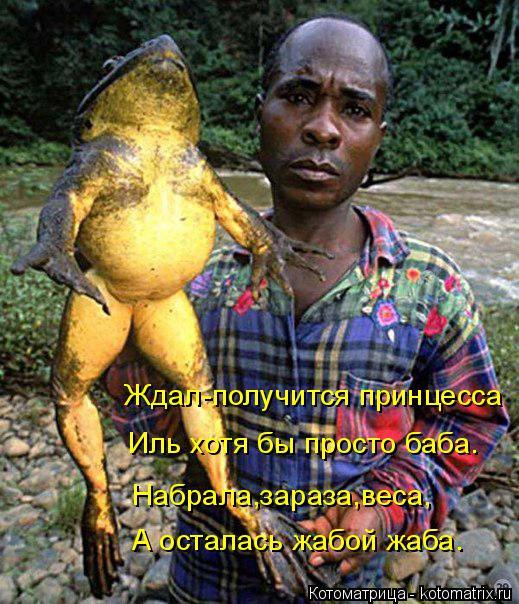 Котоматрица: Ждал-получится принцесса Иль хотя бы просто баба. Набрала,зараза,веса, А осталась жабой жаба.