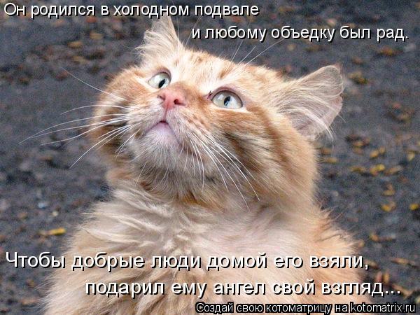 Котоматрица: Он родился в холодном подвале и любому объедку был рад. Чтобы добрые люди домой его взяли, подарил ему ангел свой взгляд...