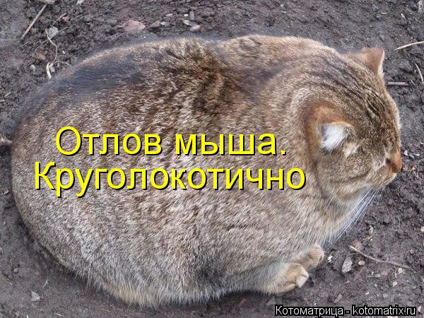 Котоматрица: Круголокотично Отлов мыша.