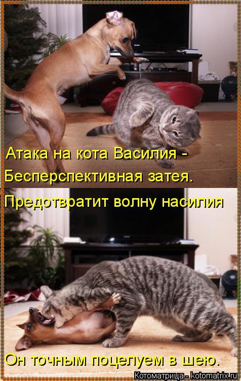 Котоматрица: Атака на кота Василия - Бесперспективная затея. Предотвратит волну насилия Он точным поцелуем в шею.