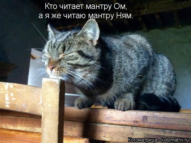 Котоматрица: Кто читает мантру Ом, а я же читаю мантру Ням.