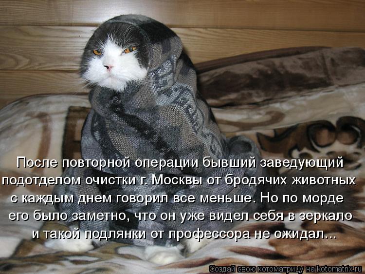 Котоматрица: После повторной операции бывший заведующий подотделом очистки г. Москвы от бродячих животных с каждым днем говорил все меньше. Но по морде