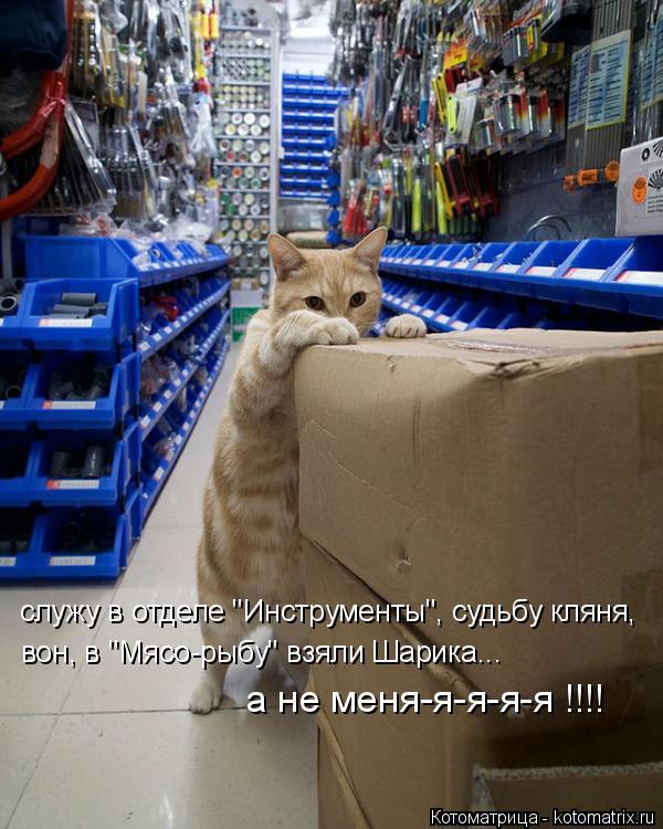 "Котоматрица: служу в отделе ""Инструменты"", судьбу кляня, вон, в ""Мясо-рыбу"" взяли Шарика... а не меня-я-я-я-я !!!!"