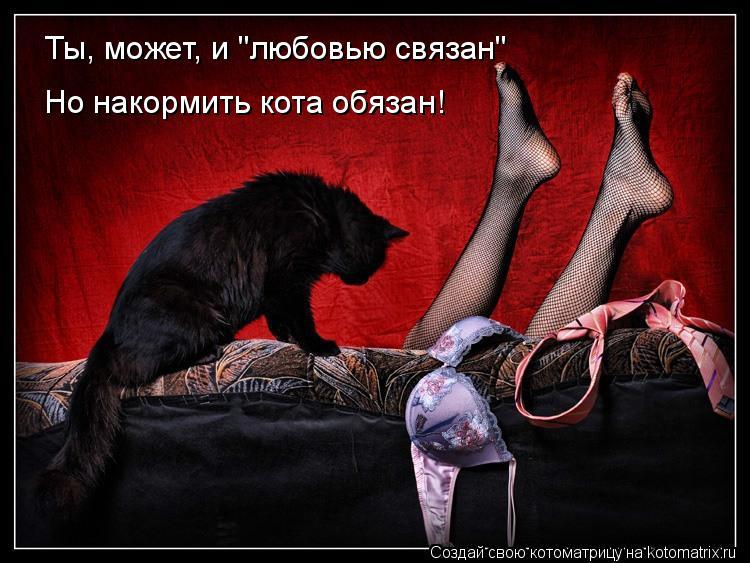 """Котоматрица: Ты, может, и """"любовью связан"""" Но накормить кота обязан!"""