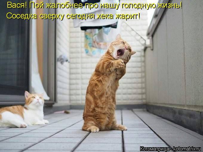 Котоматрица: Вася! Пой жалобнее про нашу голодную жизнь! Соседка сверху сегодня хека жарит!
