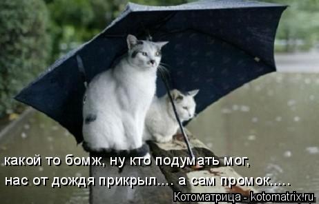 Котоматрица: какой то бомж, ну кто подумать мог, нас от дождя прикрыл.... а сам промок.....