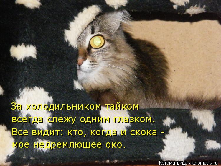 Котоматрица: За холодильником тайком  всегда слежу одним глазком. Все видит: кто, когда и скока - мое недремлющее око.