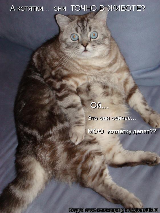 Котоматрица: А котятки...  они  ТОЧНО В  ЖИВОТЕ? Ой... Это они сейчас...   МОЮ  котлетку делят??