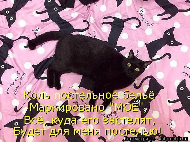 """Котоматрица: Коль постельное бельё Маркировано """"МОЁ"""", Всё, куда его застелят, Будет для меня постелью!"""