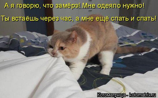Котоматрица: А я говорю, что замёрз! Мне одеяло нужно!  Ты встаёшь через час, а мне ещё спать и спать!