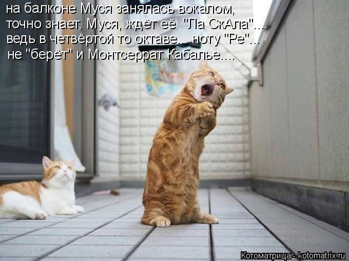 """Котоматрица: на балконе Муся занялась вокалом, точно знает, Муся, ждёт её  """"Ла СкАла"""".... ведь в четвёртой то октаве... ноту """"Ре""""... не """"берёт"""" и Монтсеррат Кабал"""