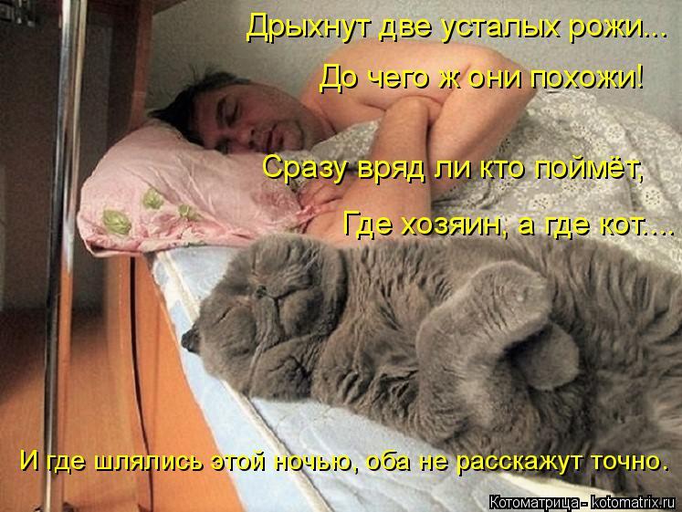 Котоматрица: Дрыхнут две усталых рожи...  До чего ж они похожи! Сразу вряд ли кто поймёт,  Где хозяин, а где кот.... И где шлялись этой ночью, оба не расскажут