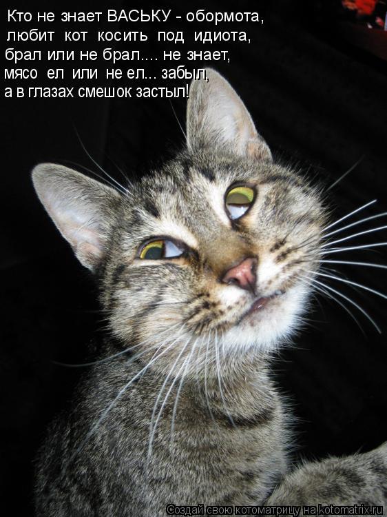 Котоматрица: Кто не знает ВАСЬКУ - обормота, любит  кот  косить  под  идиота, брал или не брал.... не знает, мясо  ел  или  не ел... забыл, а в глазах смешок засты