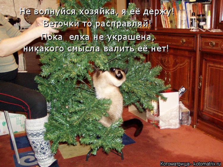 Котоматрица: Не волнуйся хозяйка, я её держу!  Веточки то расправляй! Пока  елка не украшена,  никакого смысла валить её нет!