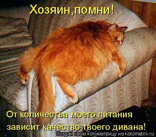Котоматрица: Хозяин,помни! От количества моего питания зависит качество твоего дивана!