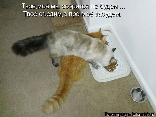 Котоматрица: Твоё,моё,мы ссорится не будем.... Твоё съедим,а про моё забудем.