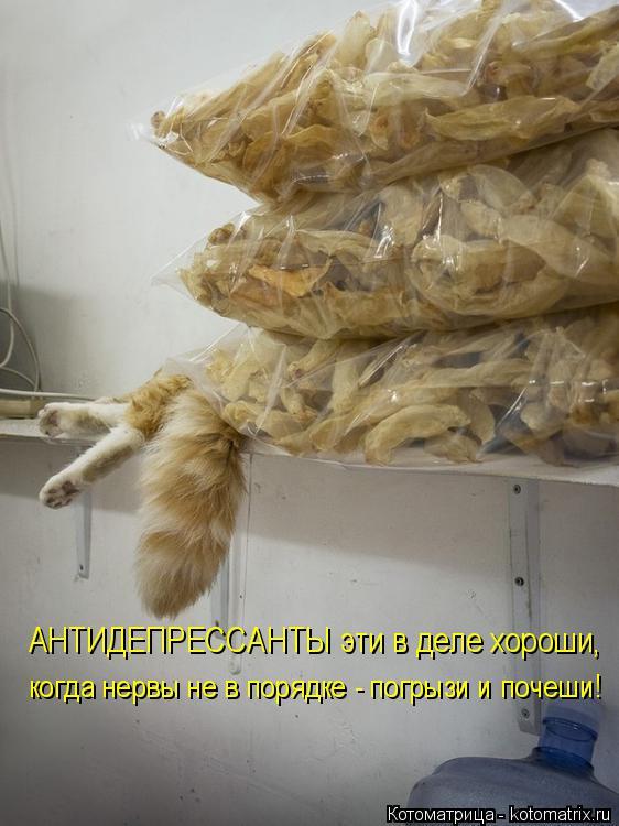 Котоматрица: АНТИДЕПРЕССАНТЫ эти в деле хороши, когда нервы не в порядке - погрызи и почеши!