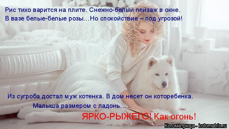 Котоматрица: Рис тихо варится на плите. Снежно-белый пейзаж в окне. В вазе белые-белые розы…Но спокойствие – под угрозой! Из сугроба достал муж котенка.