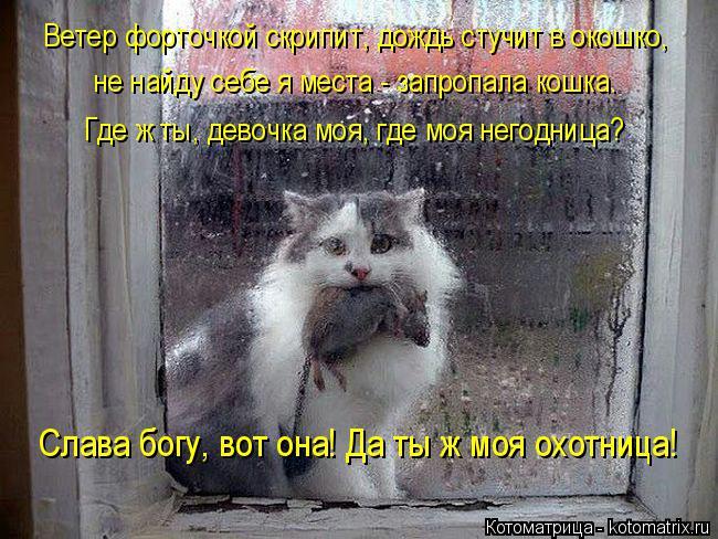 Котоматрица: Слава богу, вот она! Да ты ж моя охотница! Ветер форточкой скрипит, дождь стучит в окошко, не найду себе я места - запропала кошка. Где ж ты, дев