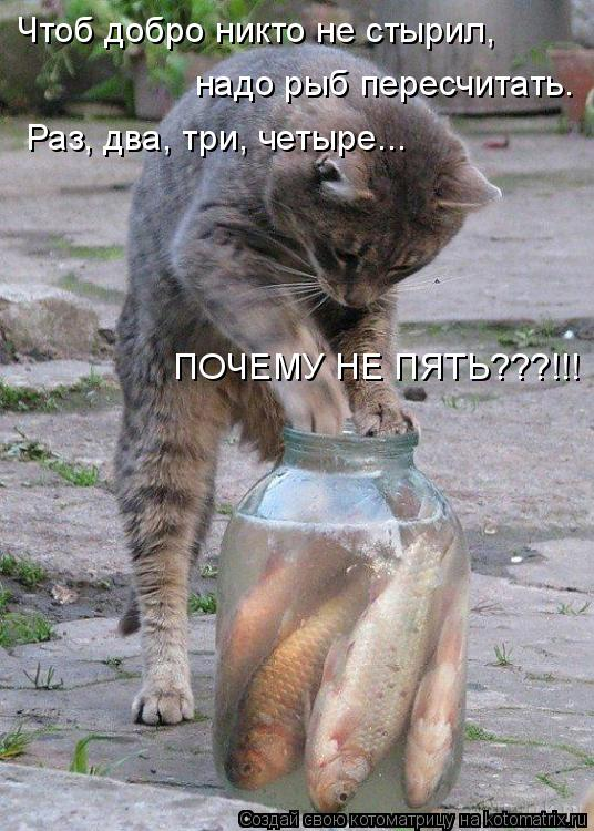 Котоматрица: Чтоб добро никто не стырил, надо рыб пересчитать. Раз, два, три, четыре... ПОЧЕМУ НЕ ПЯТЬ???!!!