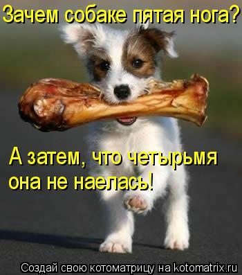 Котоматрица: Зачем собаке пятая нога? А затем, что четырьмя она не наелась!