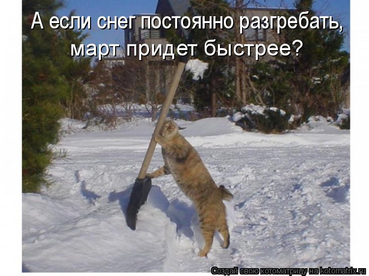 Котоматрица: А если снег постоянно разгребать, март придет быстрее?