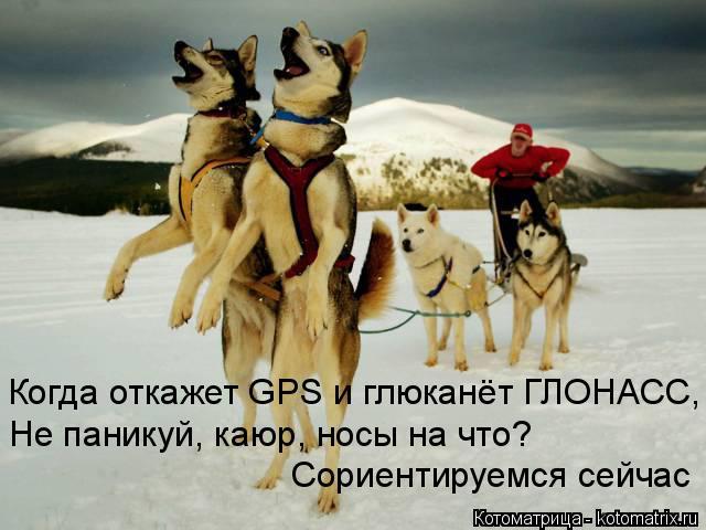 Котоматрица: Когда откажет GPS и глюканёт ГЛОНАСС, Не паникуй, каюр, носы на что? Сориентируемся сейчас