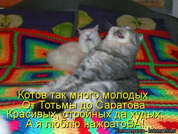 Котоматрица: А я люблю нажратоВА!... Красивых, стройных да худых, От Тотьмы до Саратова Котов так много молодых