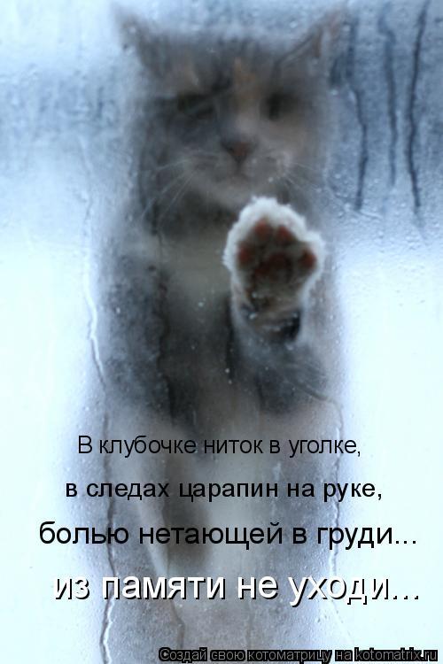 Котоматрица: болью нетающей в груди... В клубочке ниток в уголке, в следах царапин на руке,  из памяти не уходи...
