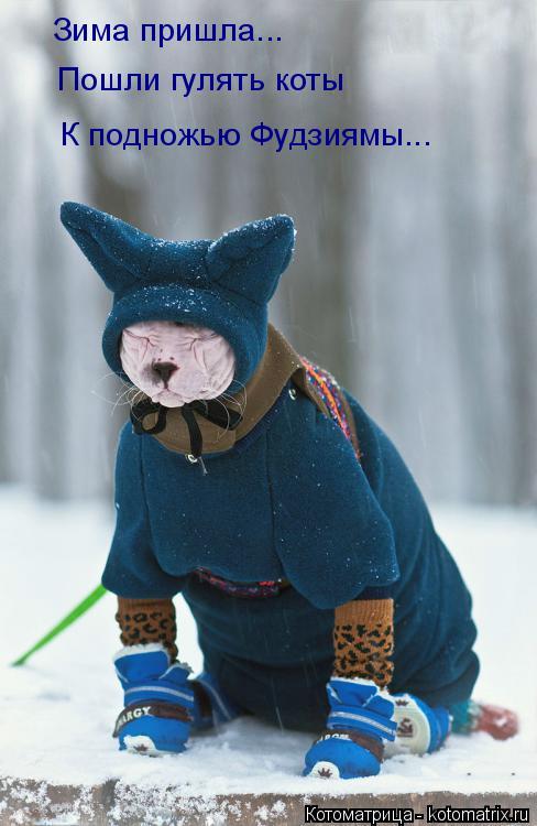 Котоматрица: Зима пришла... Пошли гулять коты К подножью Фудзиямы...