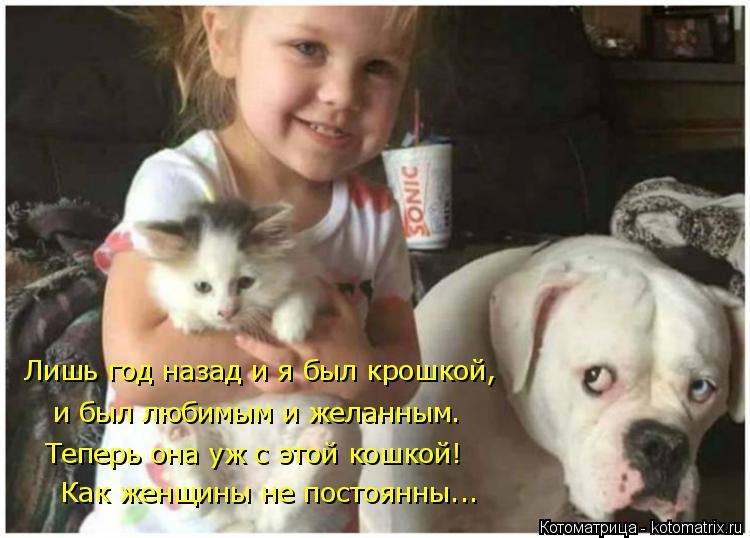 Котоматрица: Лишь год назад и я был крошкой,  и был любимым и желанным. Теперь она уж с этой кошкой! Как женщины не постоянны...
