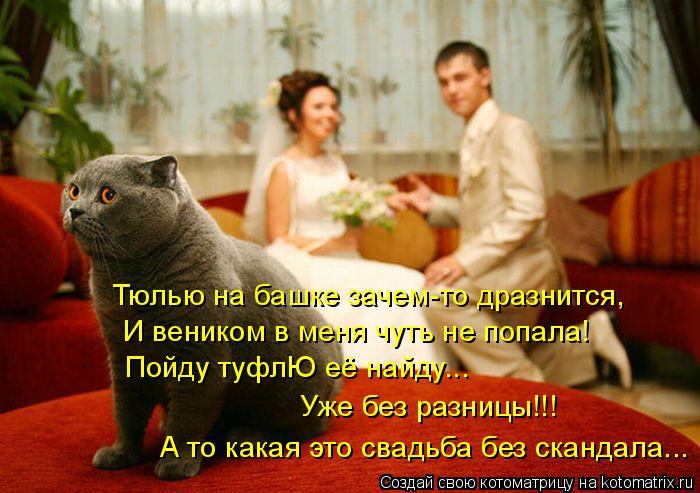 Котоматрица: Тюлью на башке зачем-то дразнится, И веником в меня чуть не попала! Пойду туфлЮ её найду...  Уже без разницы!!!   А то какая это свадьба без сканд