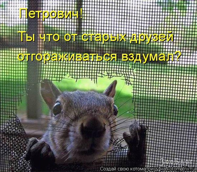 Котоматрица: Петрович!  Ты что от старых друзей отгораживаться вздумал?