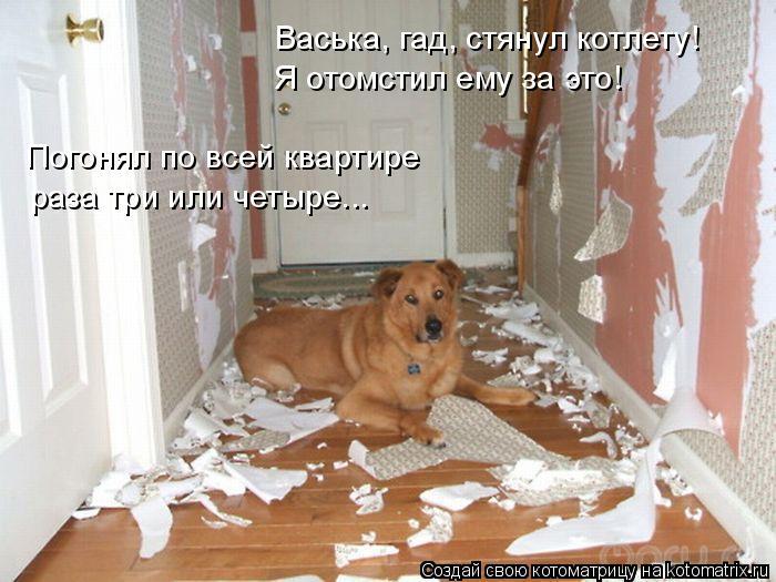 Котоматрица: Васька, гад, стянул котлету! Я отомстил ему за это! Погонял по всей квартире  раза три или четыре...