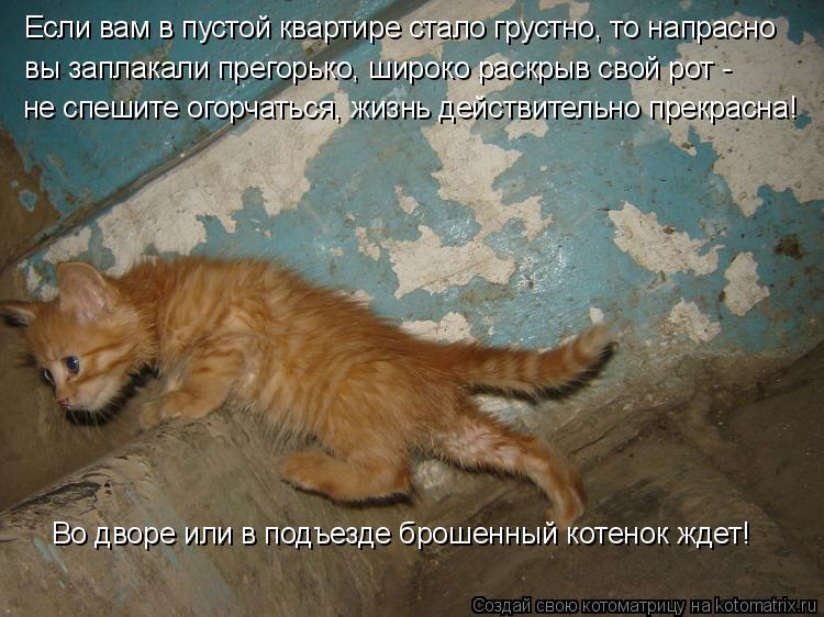Котоматрица: Если вам в пустой квартире стало грустно, то напрасно вы заплакали прегорько, широко раскрыв свой рот -  не спешите огорчаться, жизнь действ