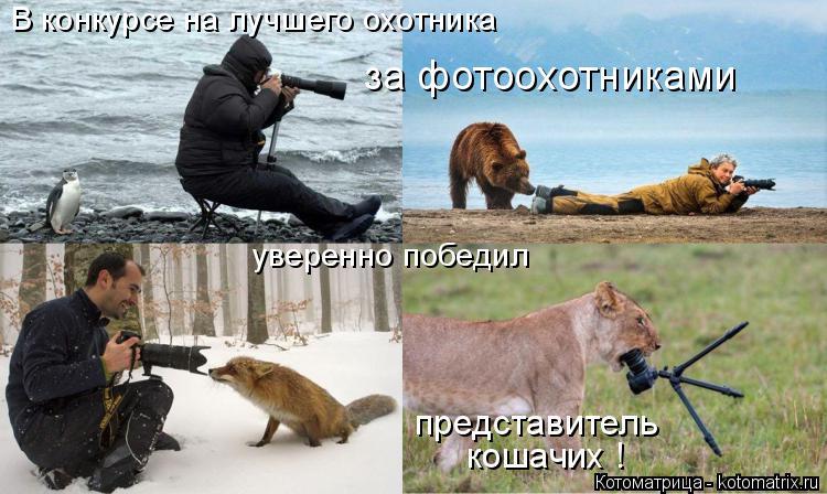 Котоматрица: В конкурсе на лучшего охотника за фотоохотниками уверенно победил представитель кошачих !