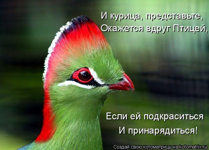 Котоматрица: И принарядиться! Если ей подкраситься Окажется вдруг Птицей, И курица, представьте,