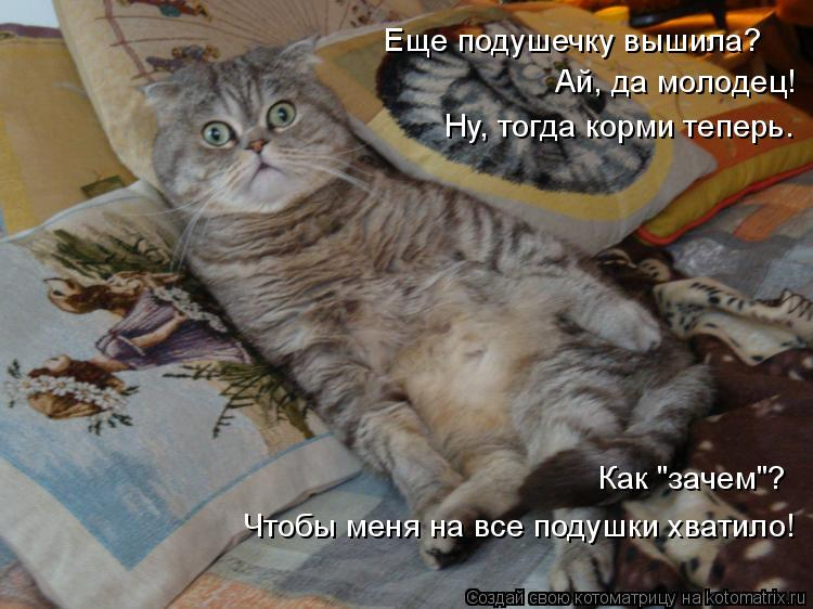 """Котоматрица: Еще подушечку вышила? Ай, да молодец! Ну, тогда корми теперь. Как """"зачем""""? Чтобы меня на все подушки хватило!"""