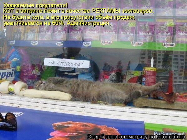 Котоматрица: Уважаемые покупатели! КОТ в витрине лежит в качестве РЕКЛАМЫ зоотоваров. Не будите кота, в его присутствии объём продаж увеличивается на 60%.