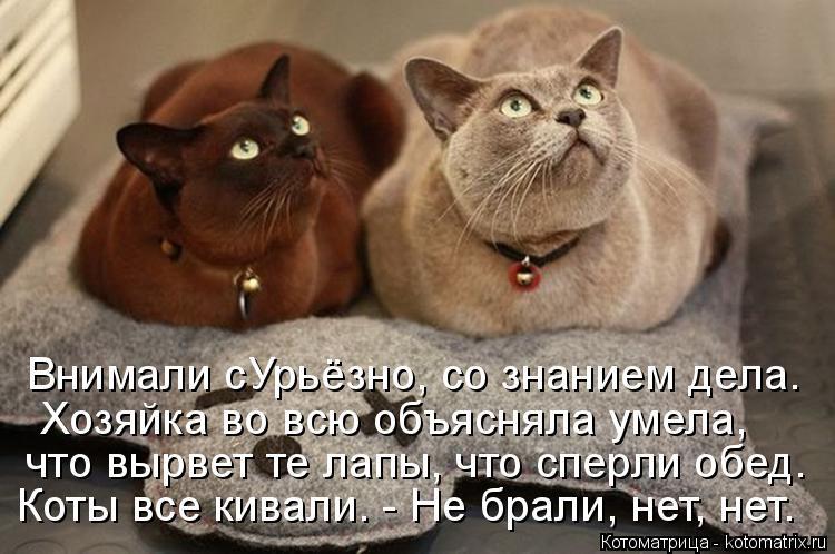 Котоматрица: Внимали сУрьёзно, со знанием дела. Хозяйка во всю объясняла умела, что вырвет те лапы, что сперли обед. Коты все кивали. - Не брали, нет, нет.