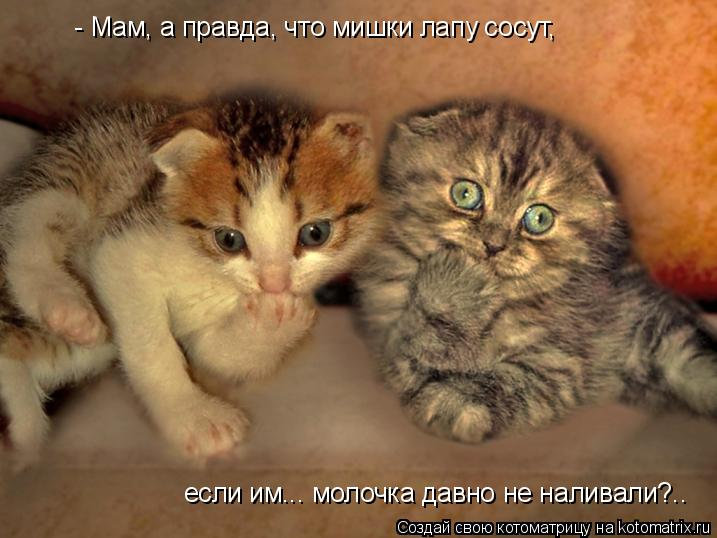 Котоматрица: - Мам, а правда, что мишки лапу сосут, если им... молочка давно не наливали?..