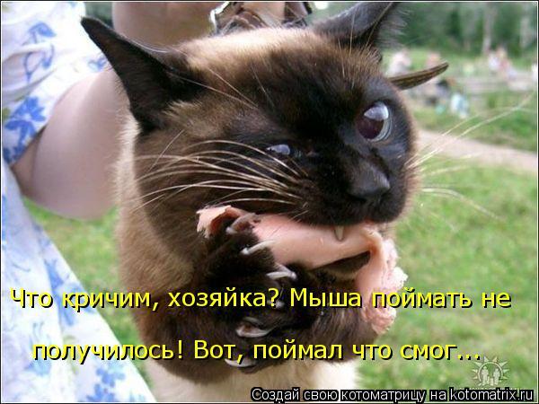 Котоматрица: Что кричим, хозяйка? Мыша поймать не  получилось! Вот, поймал что смог...