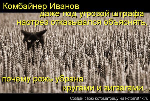 Котоматрица: Комбайнер Иванов  даже под угрозой штрафа  наотрез отказывался объяснять, почему рожь убрана  кругами и зигзагами...